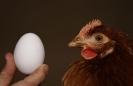 Unsere Hühner_8